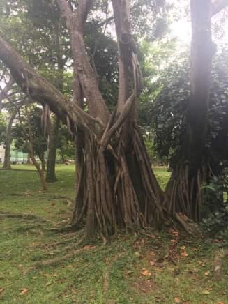 Botanico